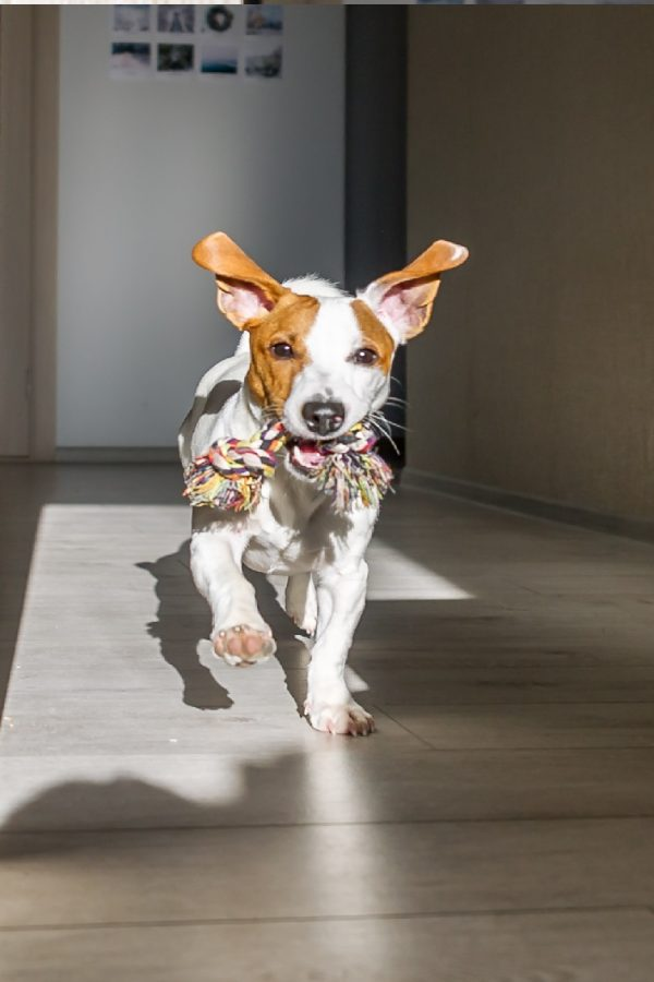 Best Smart Home Devices for Pet Owners